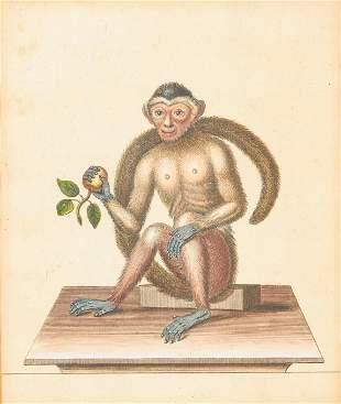 George Edwards - Four Monkey Prints