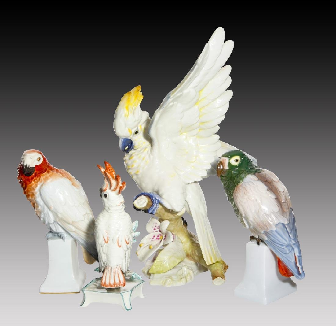 Grouping of 4 Colorful Parrots and Cockatoos - 2