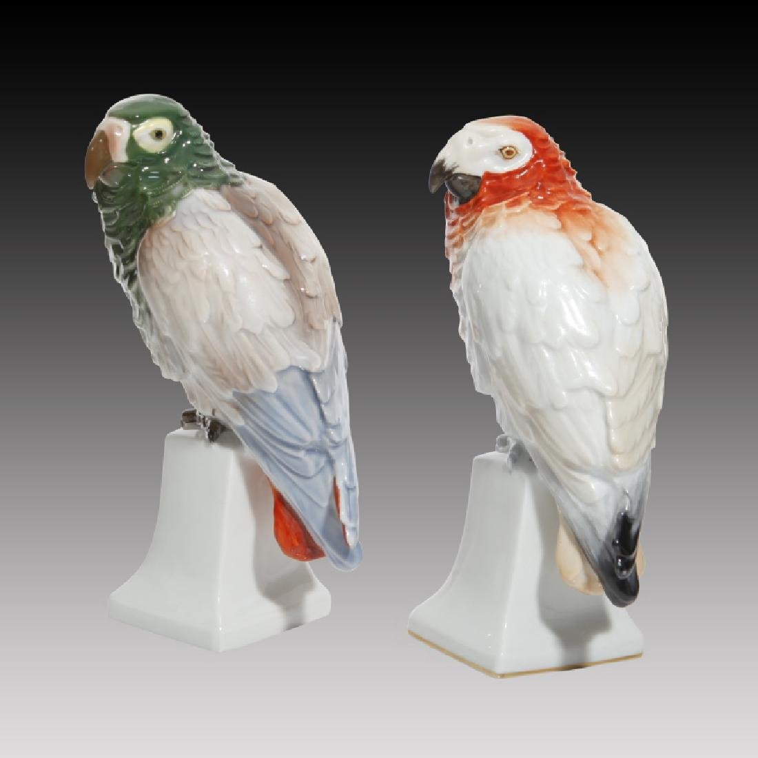 Grouping of 4 Colorful Parrots and Cockatoos - 4