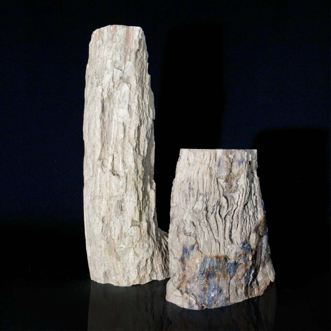 Pair of Petrified Wood Specimens, Oregon USA