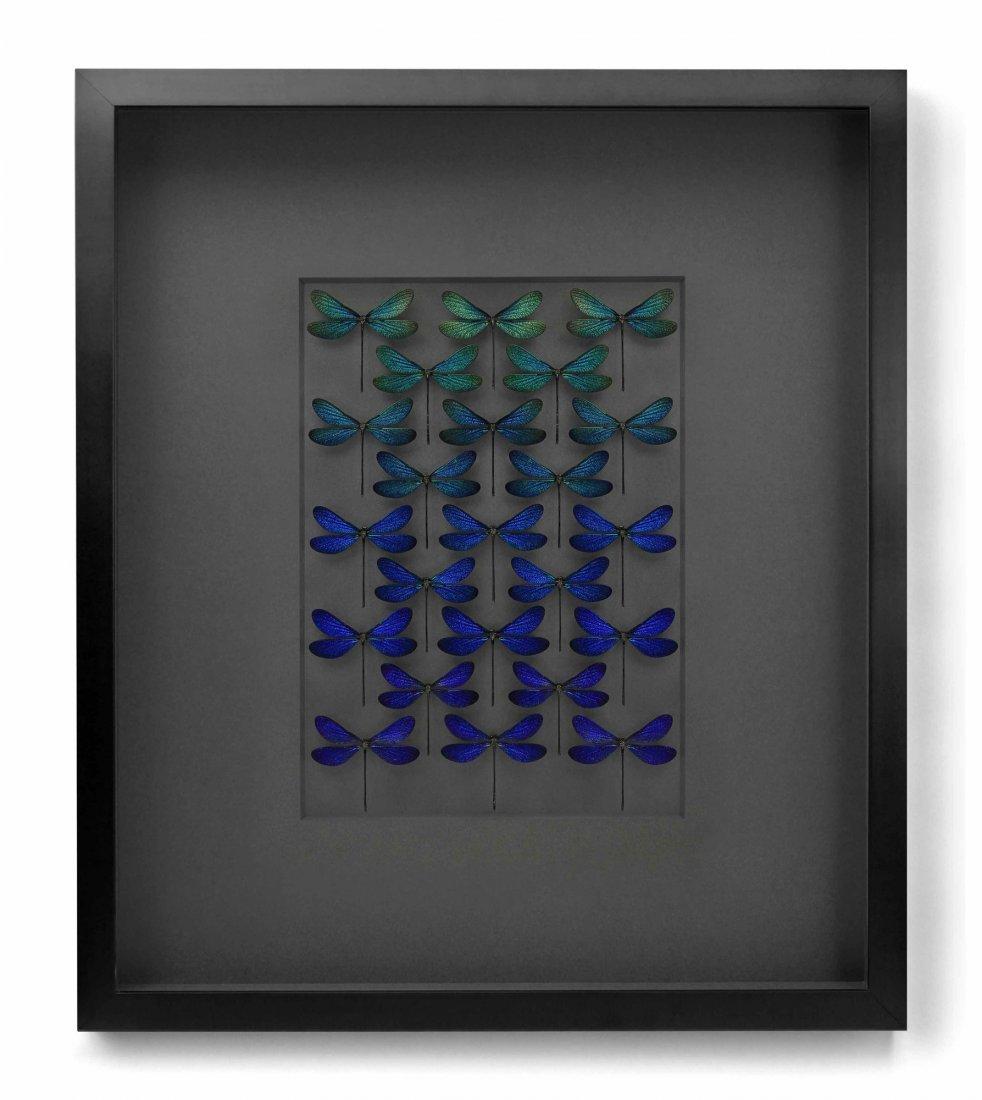 Blue Damselfly Study by Christopher Marley