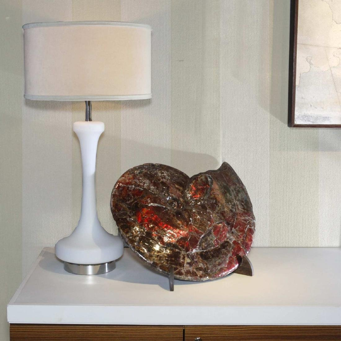 Canadian Ammonite on Wood Stand