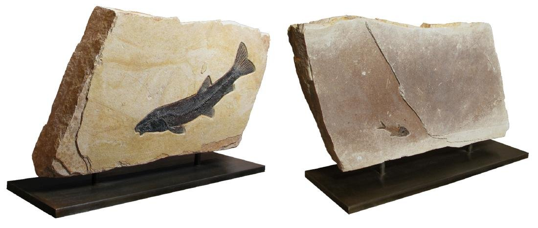 Fossilized Fish Presented in Double Sculpture