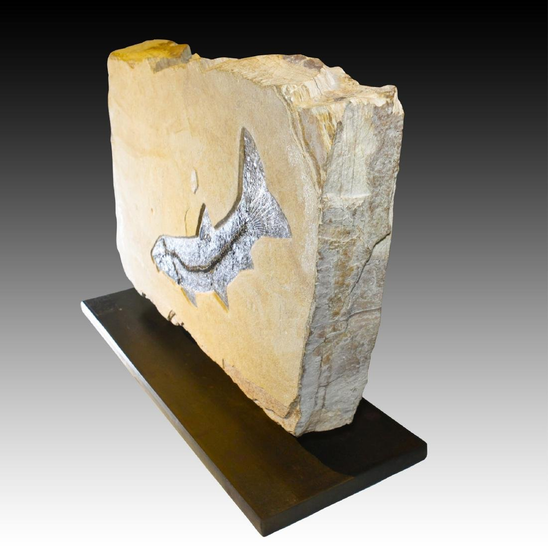 Fossilized Fish Presented in Double Sculpture - 3