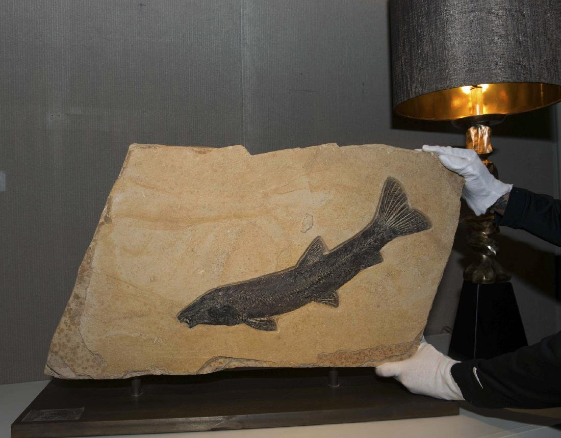 Fossilized Fish Presented in Double Sculpture - 5