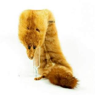 Vintage Taxidermized Ferret