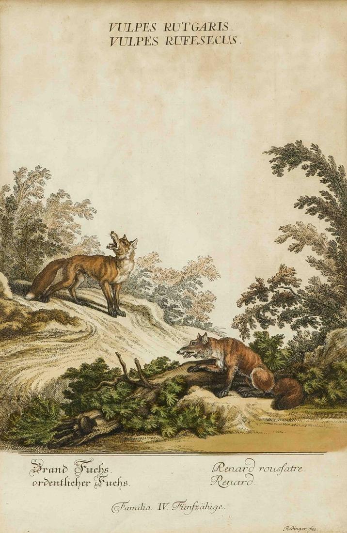 Johann Elias Ridinger (1698-1767), two colored