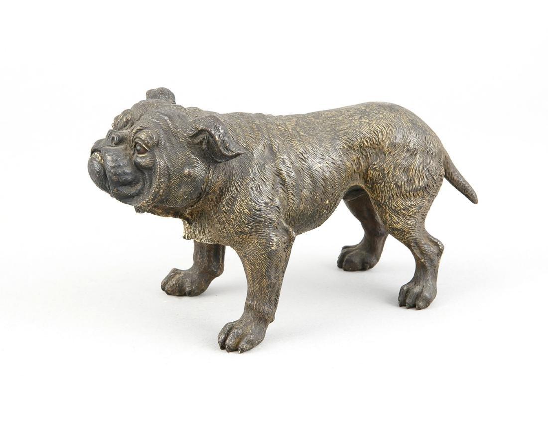 Viennese bronze around 1900, large figure of a bulldog