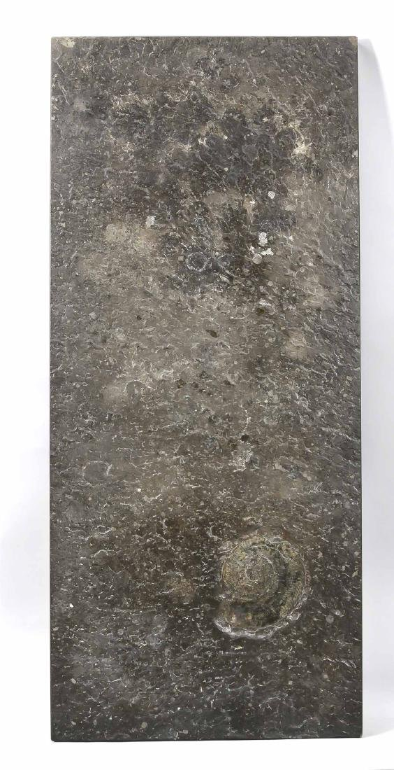 Table top with ammonite, Posidonia slate, wood maggots,