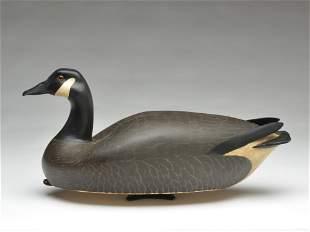 Rare Canada goose, Hec Whittington, Oglesby, Illinois.