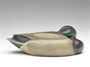 Incredibly executed working mallard drake in a tucked