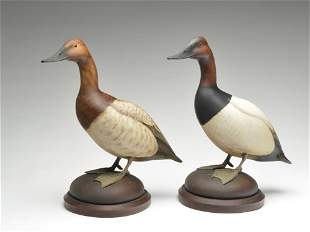 Excellent pair of full size standing canvasbacks,