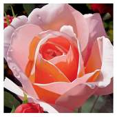 Brian Davis Morning Rose Limited Edition Giclee on