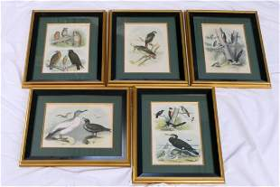 LOT OF 5 LITHOGRAPHS HAND COLORED ETCHINGS BIRDS