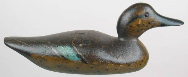 434: Rare Early Mason or Peterson Blue Winged Teal Hen