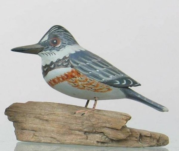 437: RARE miniature belted kingfisher on a driftwood ba