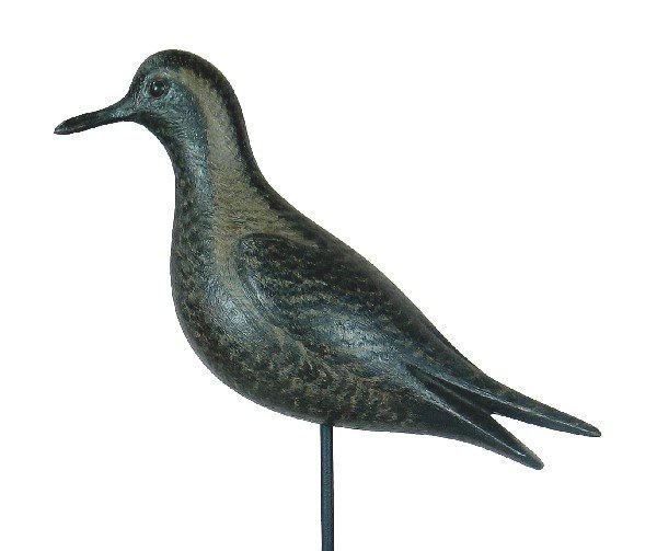 4: Life size black bellied plover in XOC. 700-900