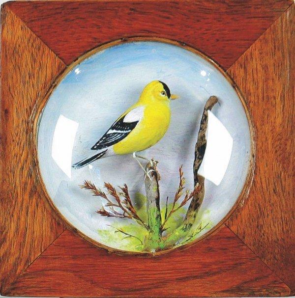 528K: Goldfinch Diorame by A. Peltier, RI