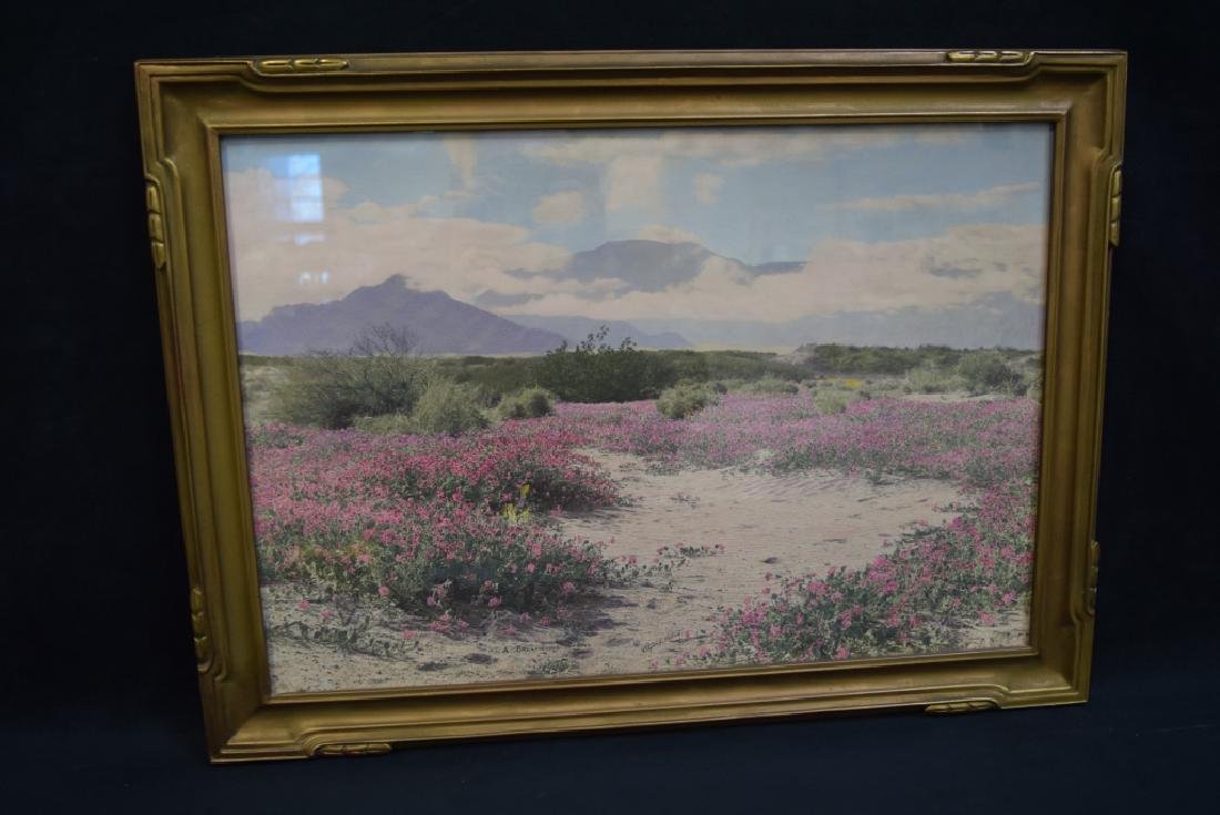 STEPHEN WILLARD HAND TINTED PHOTO BREATH OF SPRING