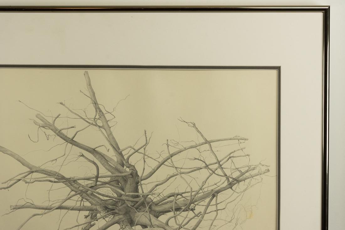 Bonnie Maclean (PA, 1939-?) Pencil - 5