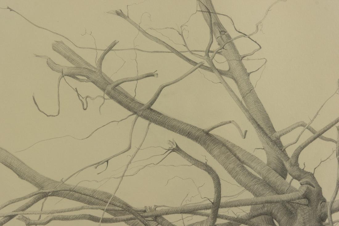 Bonnie Maclean (PA, 1939-?) Pencil - 7