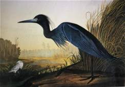 Little Blue Heron Lithograph After Audubon by M