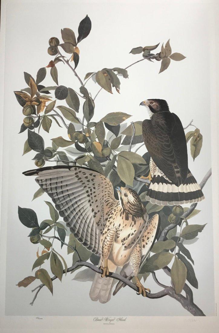 Audubon Broad Winged Hawk by M. Bernard Loates