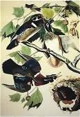 Wood Duck Lithograph After Audubon by M Bernard