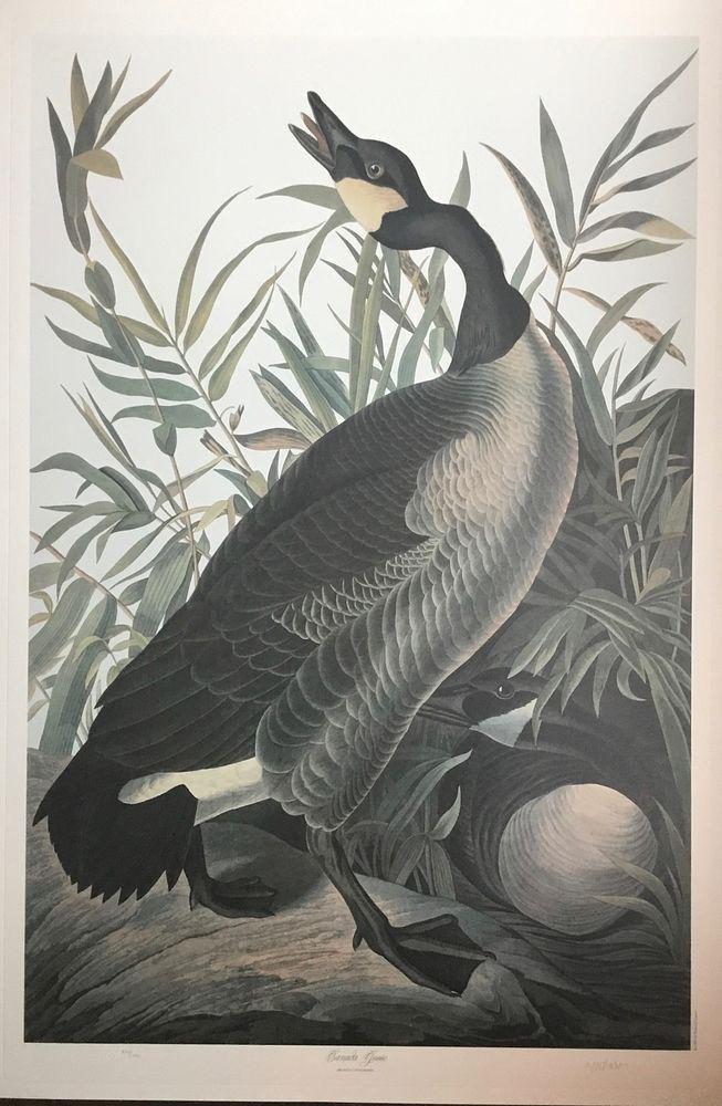 Audubon Canadian Goose by M. Bernard Loates
