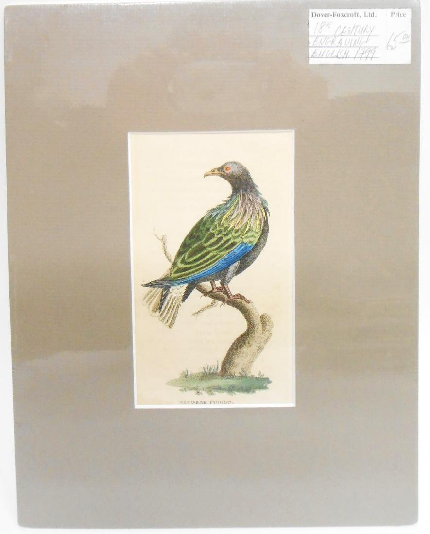 (32) 18TH & 19TH CENTURY PRINTS OF BIRDS