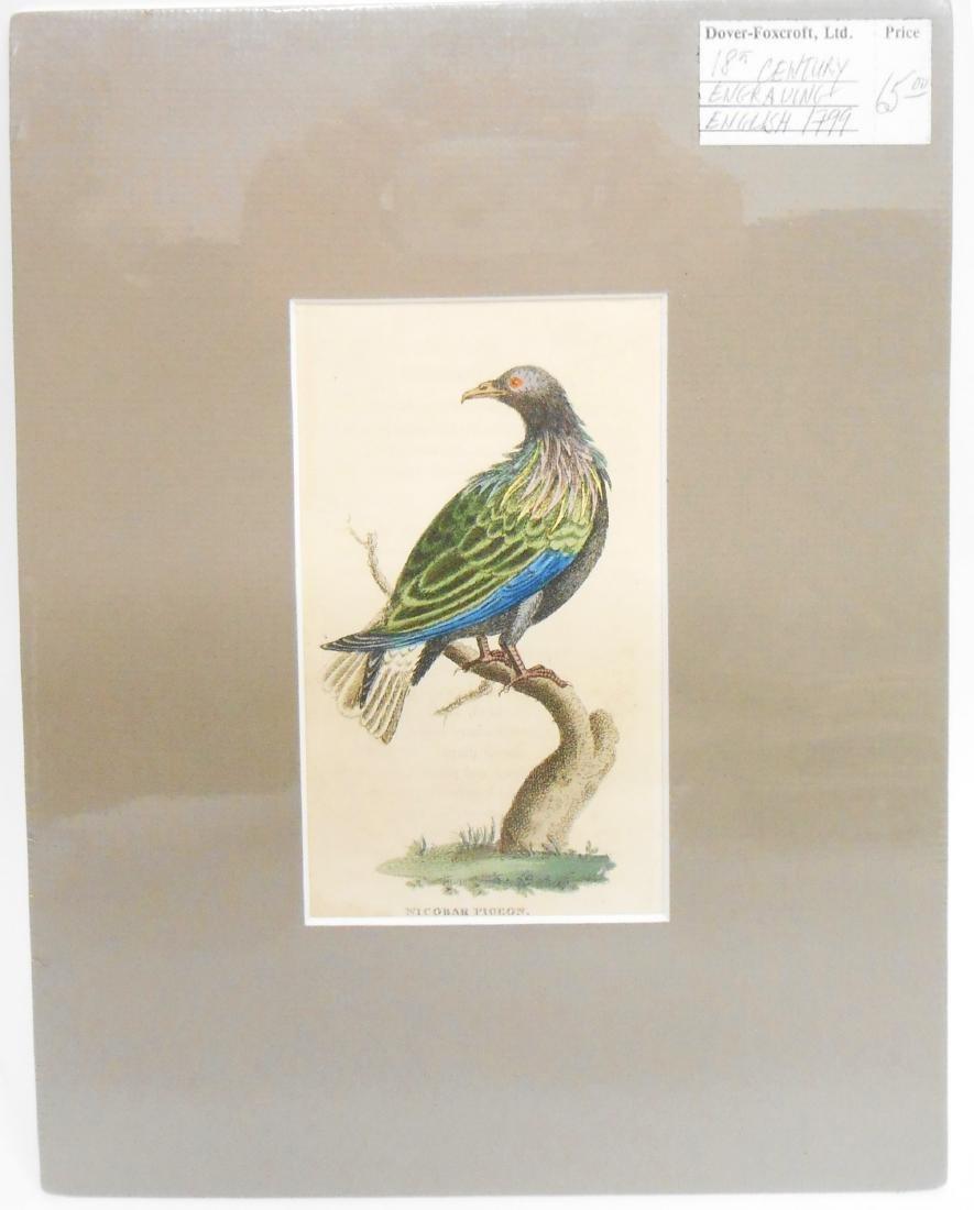(32) 18TH & 19TH CENTURY PRINTS OF BIRDS