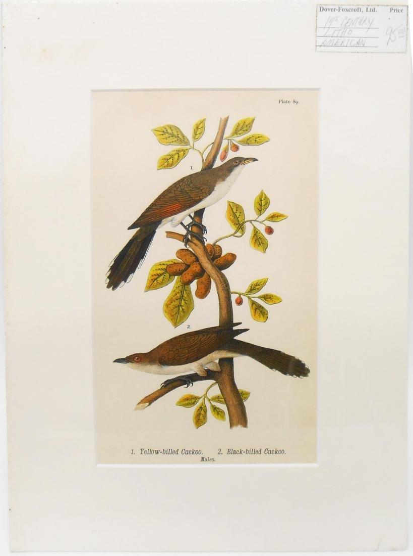(32) 18TH & 19TH CENTURY PRINTS OF BIRDS - 3