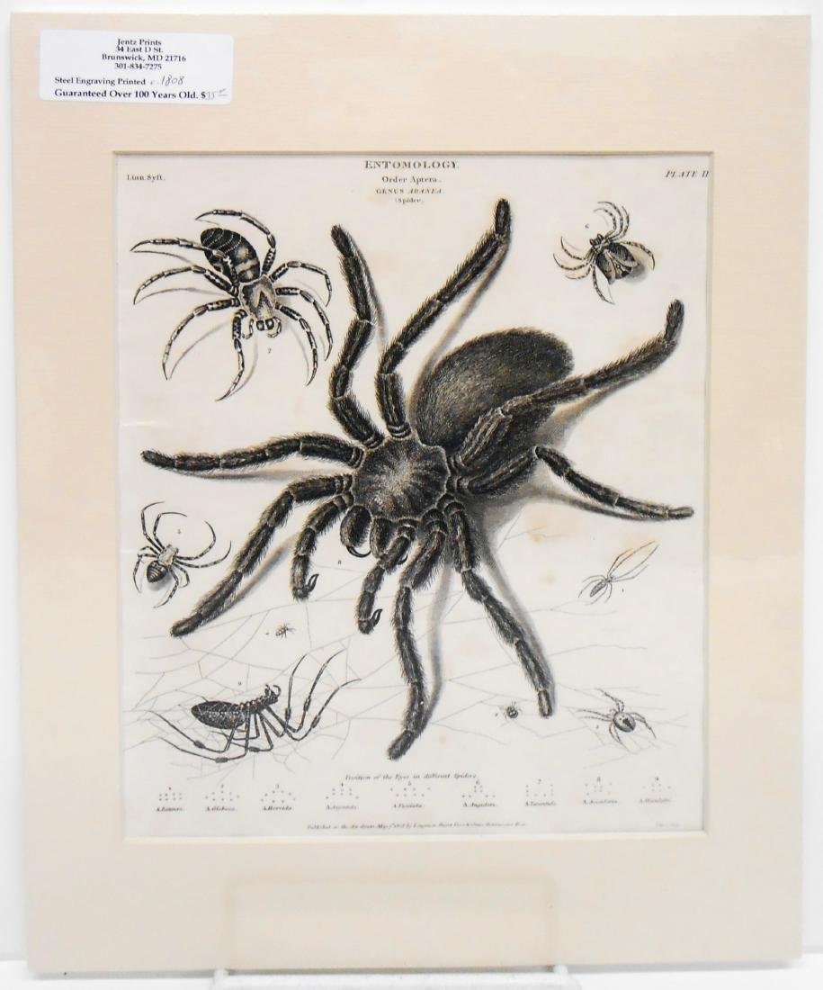 (6) ENGRAVINGS PERTAINING TO INSECTS & FISH