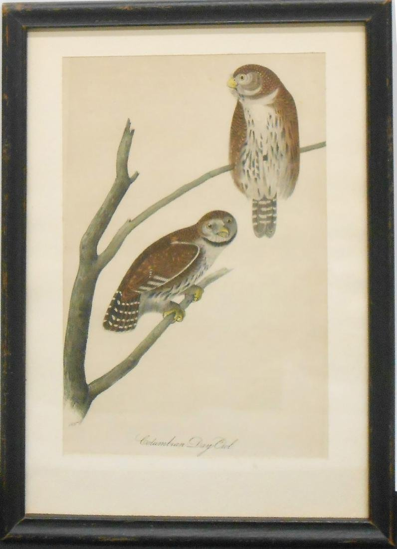 (2) EARLY AVIAN LIKELY HAND COLORED ENGRAVINGS - 2