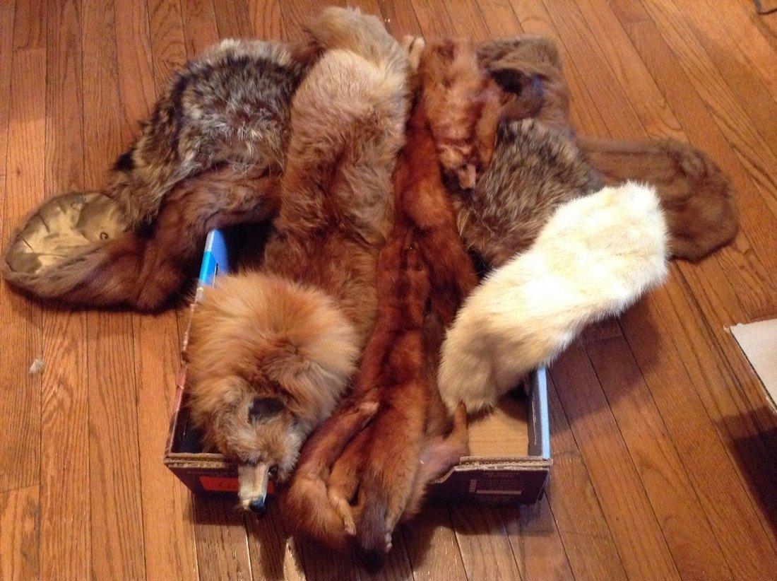 Lot of 6 Vintage Furs