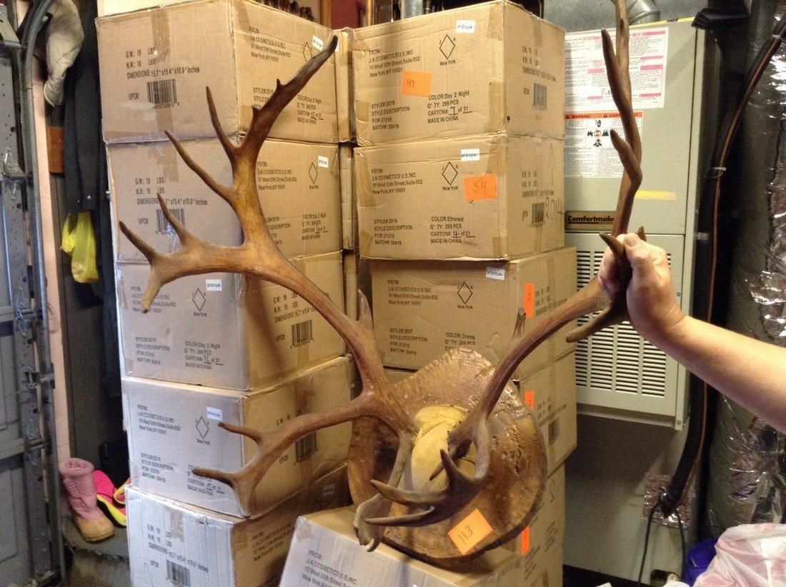 Vintage Caribou Antlers