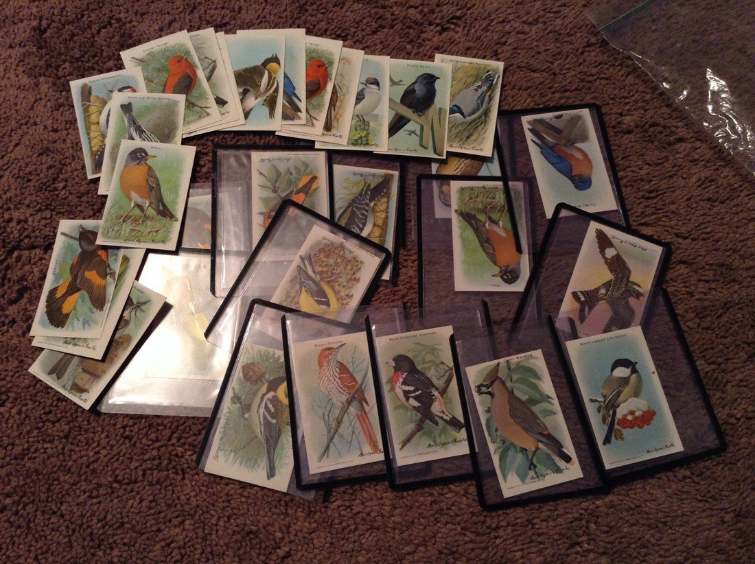 1930s and 40s Arm & Hammer bird collector cards