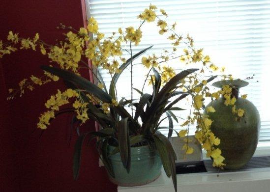 Majocla Planter and metal vase