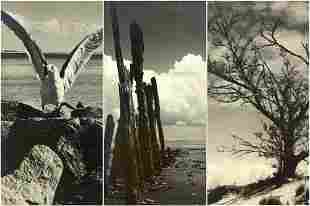 JOHN GREGORY 19031992 Lot of 3 Photographs Gull
