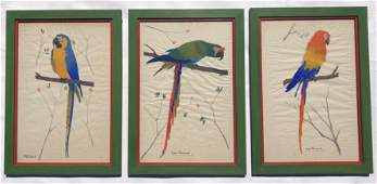 Vintage French gouache paintings of parrots,set of 3