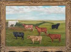 Portrait Of Prize Shorthorn & Galloway Cattle In A