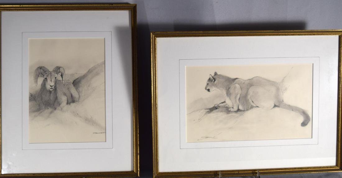 TWO TOM SANDER WILD LIFE PENCIL DRAWINGS: