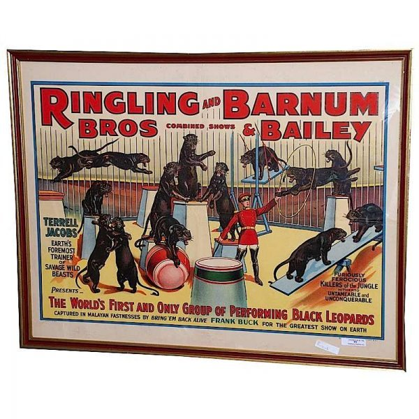 7: 1938 Framed Ringling Brothers Black Leopards Circus