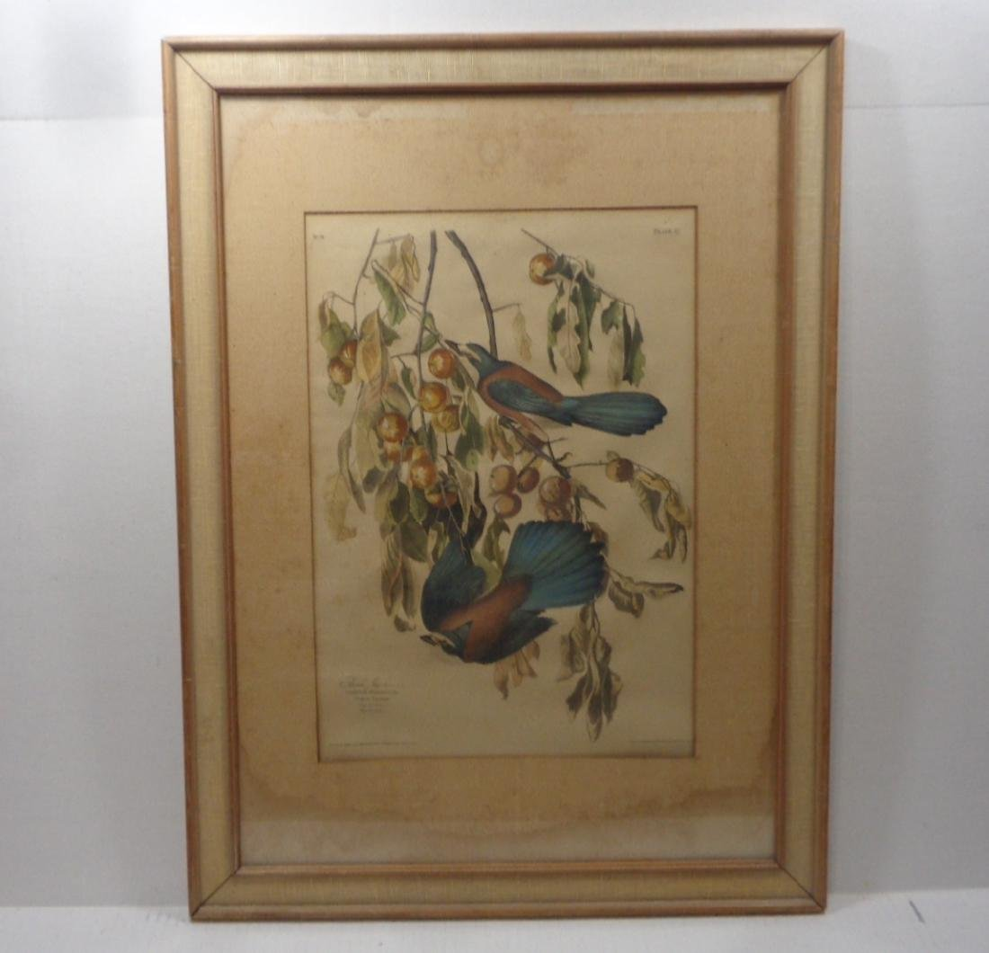 Vintage Hand Colored Bird  Print by APP co New York