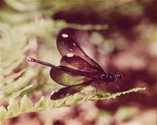 Wild Life Animal Nature Vintage Kodak Photograph