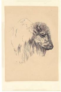 American Bison Painting by Doris Hall Pen. Coral Cables