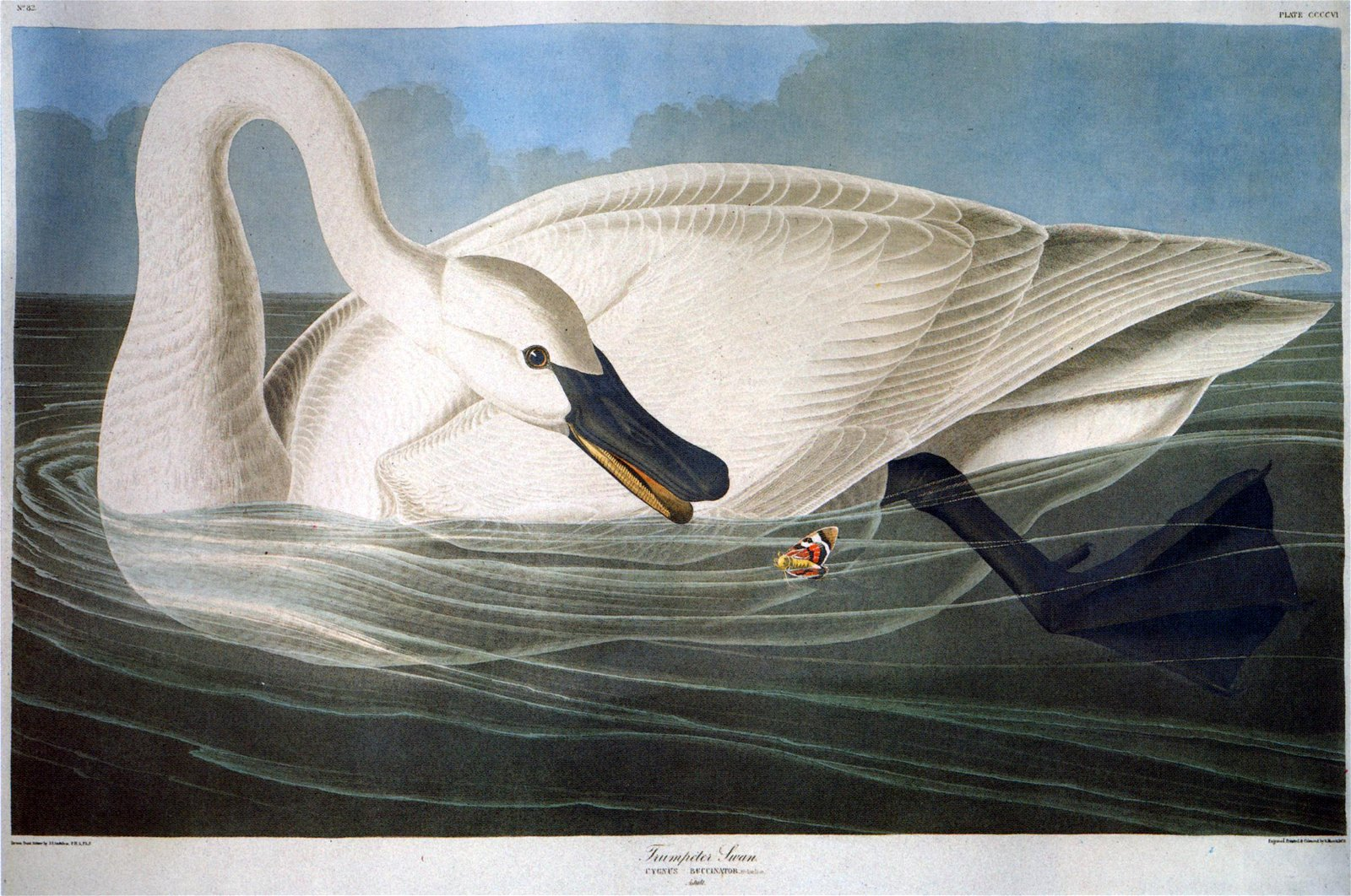 John James Audubon, American, Manner Of
