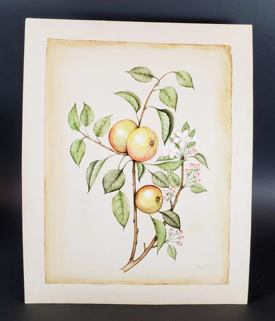 Watercolor of Fruits Signed