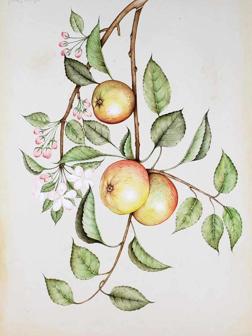 Watercolor of Fruits Signed - 2