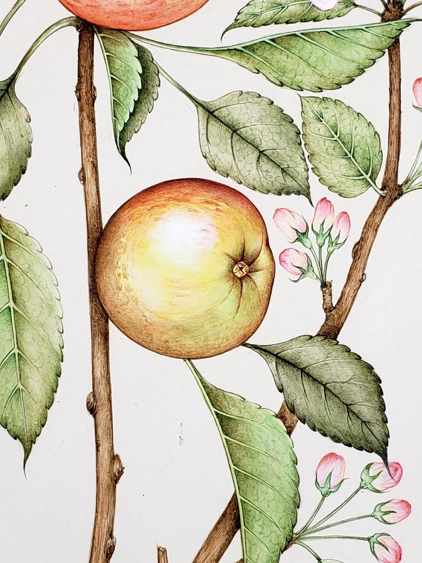 Watercolor of Fruits Signed - 4